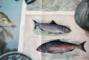 Αστεία ραντεβού με ψάρια